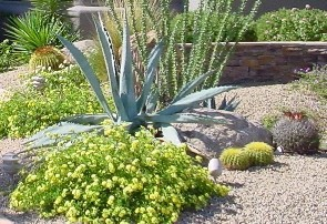 Landscaping El Paso - Xeriscaping/Desertscape